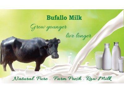 Buffalo Milk - Subscription