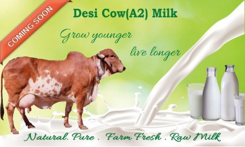 Desi Cow A2 Milk